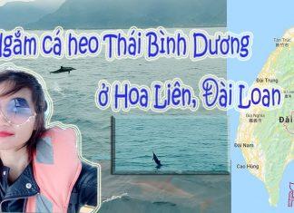 xem cá heo Hoa Liên Đài Loan