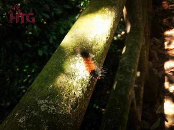 mùa bướm ở cúc phương