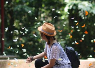 Mùa bướm Cúc Phương